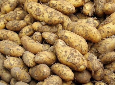 potato-1422580_1280 (1)